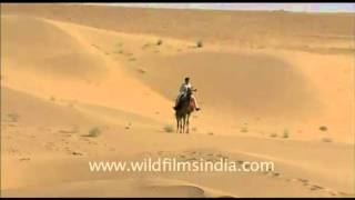 A Man riding camel in Desert National Park