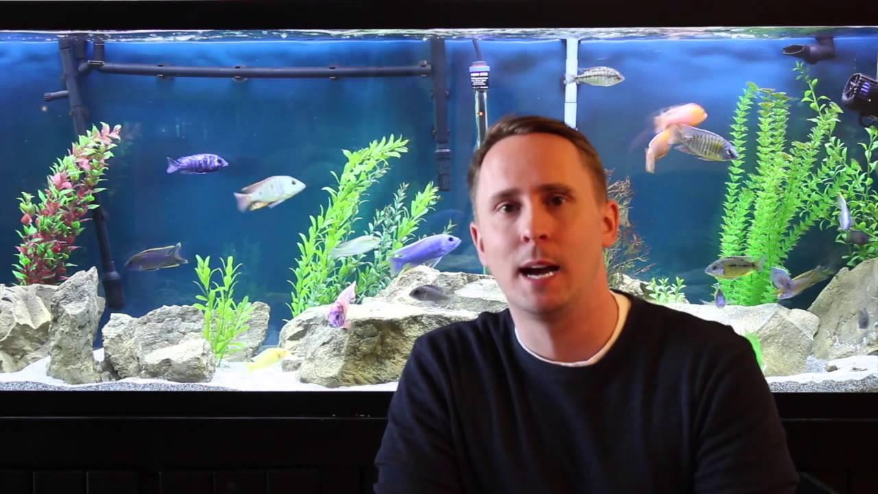 Aquarium reviews