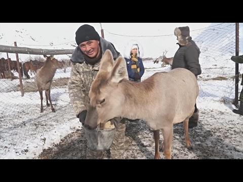 Кыргызский фермер помогает голодным оленям (новости)