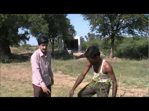 Forestry plantation practice Kannada BAIF Karnataka