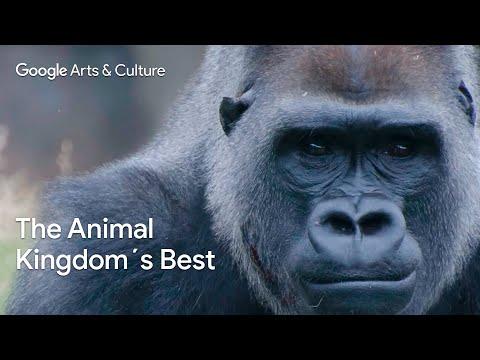 Natural History on Google Arts & Culture - #PreviouslyOnEarth