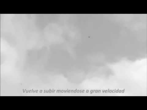 HALCÓN peregrino cazando PALOMAS de forma natural (la vida salvaje de los pajaros)