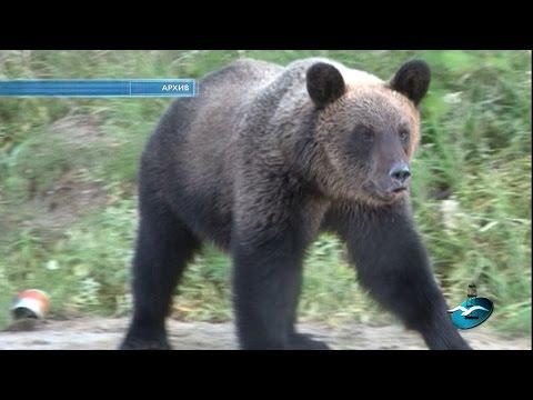 Избежать встречи с медведем