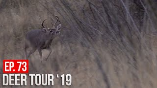 RUTTING COUES BUCKS - TED GETS HIS SHOT!