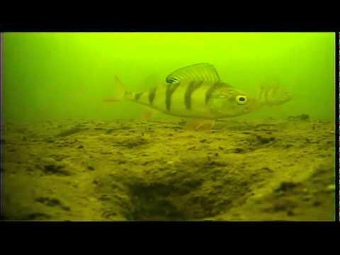 купить подводную видеокамеру для рыбалки язь 52 компакт