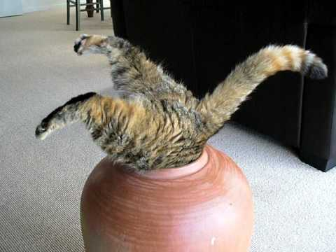 Fat Cat in pot