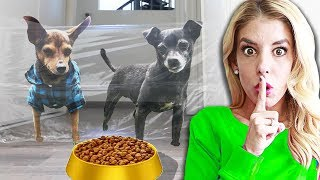 My Dogs Reaction to the Invisible Challenge! | Pawzam Dogs