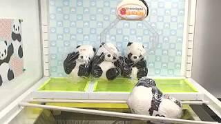 Toreba Win! Thank You Panda - Medium-Big Plushy B