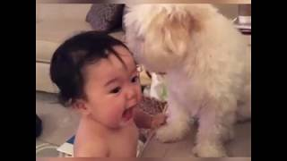 Funny Babies and Puppies are so adorable