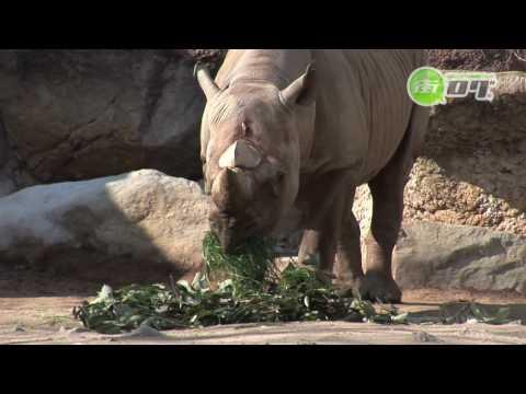 天王寺動物園 - 地域情報動画サイト 街ログ