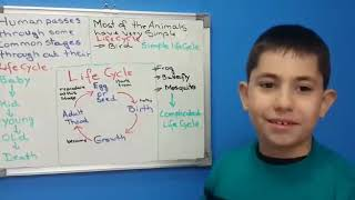 First Science Lesson - Human & Animal Life cycle