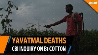 Yavatmal deaths brings illegal Bt crops under lens