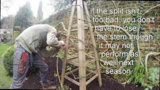 Gworld 003 - tying in a climbing rose. Part 2/3 - tying in.