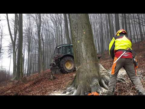 Working in forest stihl MS 500i x 9,15m³ beech