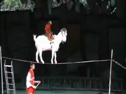 китайский цирк с трюками - splendid chinese circus with fantastic stunt