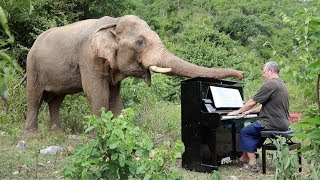 "Albinoni ""Adagio"" on Piano for Bull Elephant"