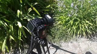 03. Media X Tutorials: Canon XC-15 Basics