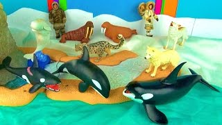 9 Arctic Animals Surprise Toys 3D Puzzles - Orca & Orca Calf Arctic Wolves Beluga Walrus