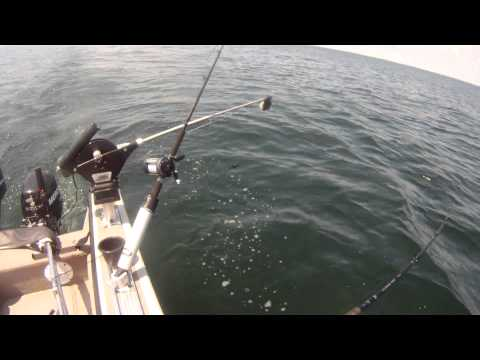 The best downrigger release style