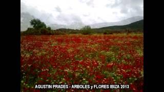 AGUSTIN PRADES - 2013-02-24 - ARBOLES y FLORES IBIZA MIX.m2t