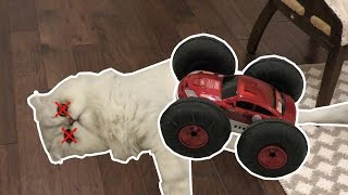 OUR CAT GOT HIT BY A CAR!!!!