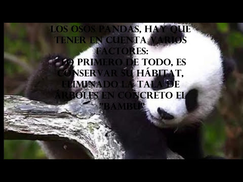 ANIMAL EN PELIGRO DE EXTINCION (OSO PANDA)