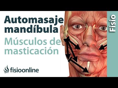 Auto - masaje de la mandíbula y musculatura de la masticación.