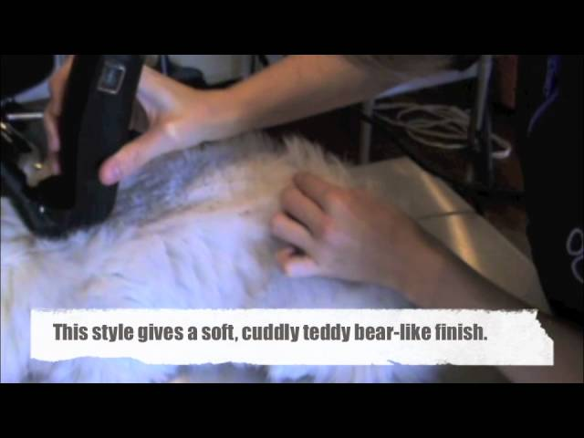 Cat Grooming Styles