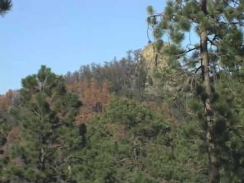 Today's Forest: Managing Mountain Pine Beetles