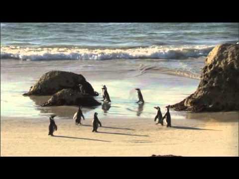 CapeTown Tourism