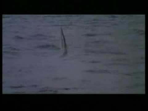 Cruel Jaws is listed (or ranked) 44 on the list The Best Shark Movies