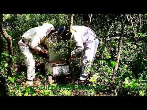 Nature Honey Ecological,Paraguay. Naturhonig Paraguay Südamerika,Miel Ecológica De Parguay