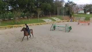 Treino Haras Cooper 1.35 UL BAJAN com Laercio da Costa , cavalos novos