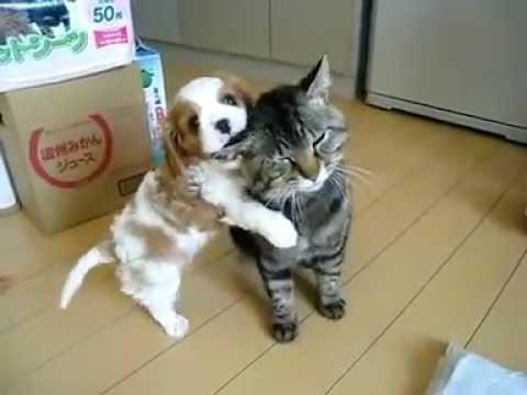 Funny cats + dogs = Love | Собака + кошка = любовь