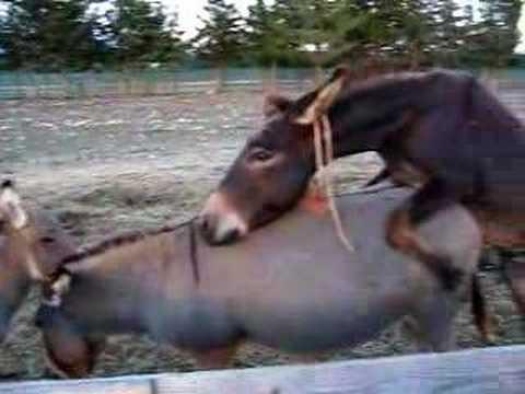 donkeys ;-)