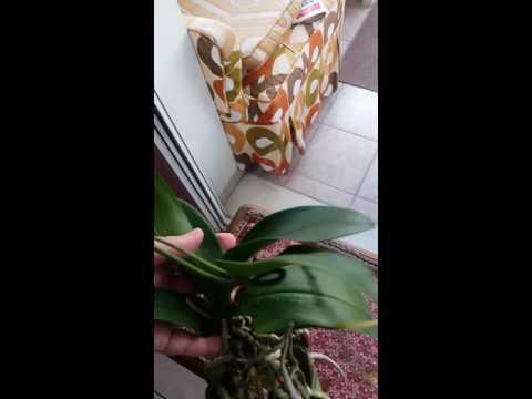 Цветы.О чём хотят рассказать орхидеи.