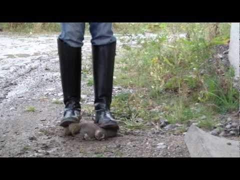 Riding Boots. Trampling teddy bear. mud therapy