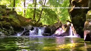 528Hz Miracle Tone - River,birds & forest sound HD - No Headphones Required - 4 Hours