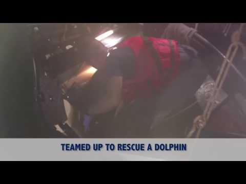 Coast Guard rescues dolphin near Fort Myers, Florida 1