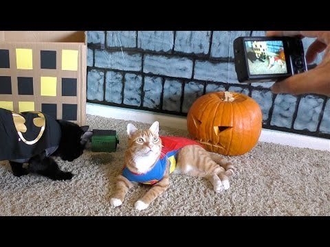 Trying to Capture a Halloween Cat Photo!