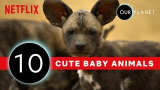 Cutest Baby Animals From Our Planet 🐾 | Netflix