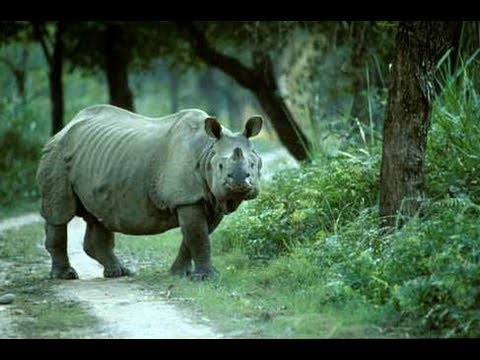 Assam- The Land of Nature's Treasure -(part 1)- wildlife.avi