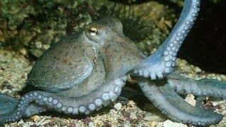 Những loài săn mồi dưới đáy biển Thế giới động vật Thế giới động vật hoang dã tổng hợp