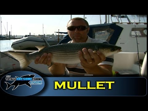 Float fishing for Mullet- Totally Awesome Fishing