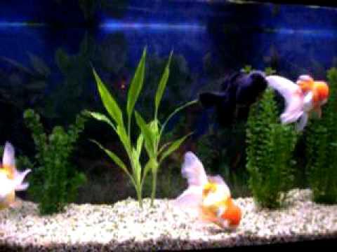La importancia del aireador en un acuario taringa for Oxigeno de peceras