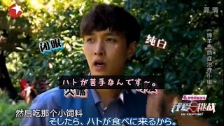 EXO LAY レイ go fighting ハトが超苦手なレイ君 日本語字幕