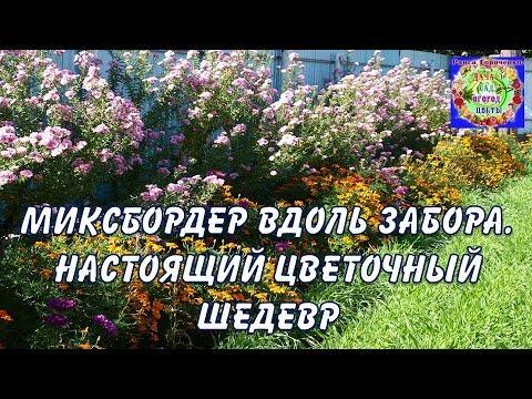 Миксбордер вдоль забора – растения для высадки по границам сада