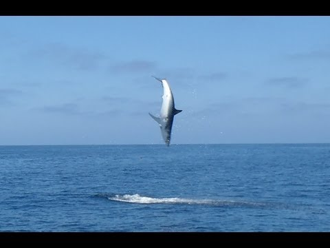 Jumping Mako - Flying Mako Shark Tournament 2012 Uncut Full