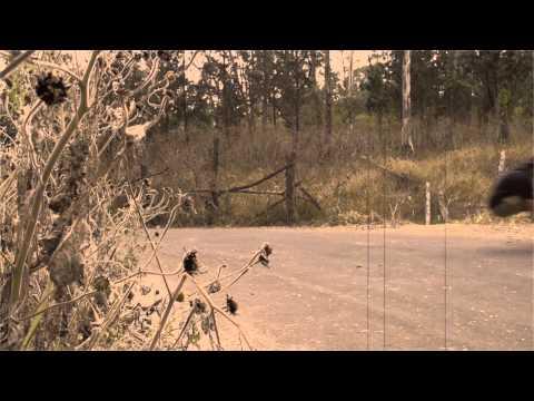 Eduardo Cordero - LaBandaCrew - Volatile longboards