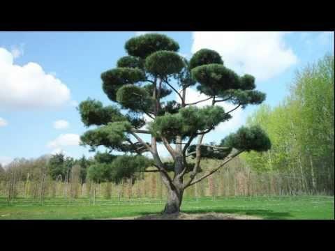 Baumpflanzaktion Waldkiefer Durch Den Lust Auf Garten-Partner Falko Werner